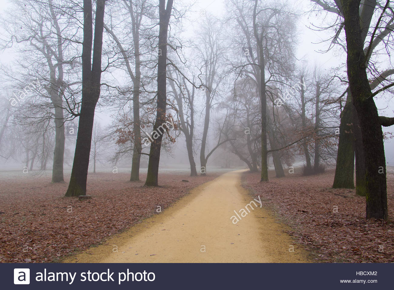 Volkspark Gienicke, Berlin city park in fall, foggy, misty weather foggy day autumn landscape, moody abstract landscape - Stock Image