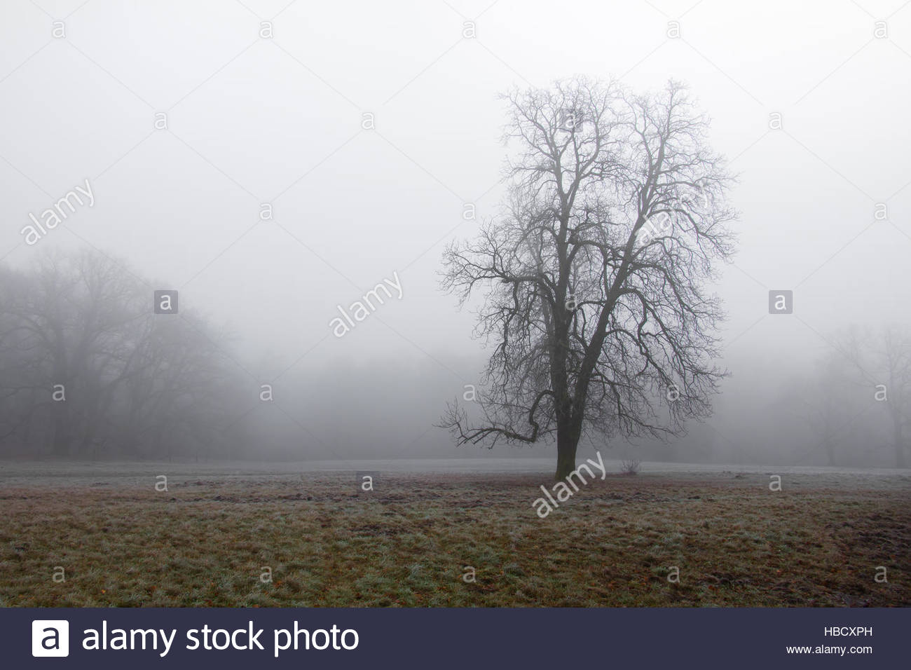 Volkspark Gienicke, Berlin city park in fall, foggy, misty weather foggy day, moody abstract landscape foggy - Stock Image