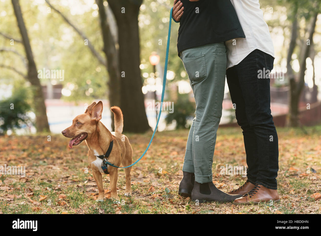 Waist down view of young male couple with dog hugging in  park - Stock Image