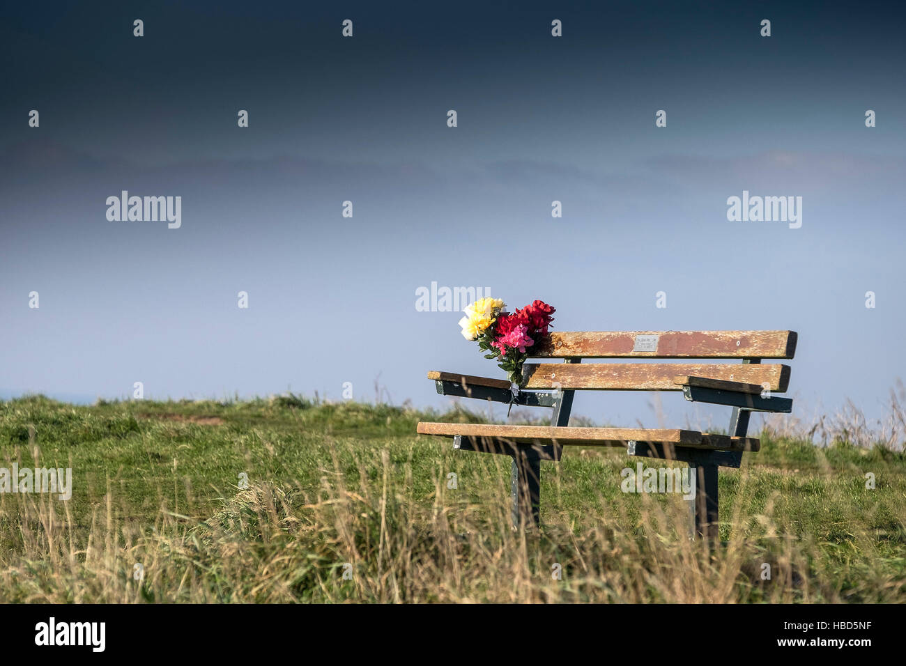 Flowers left on a memorial bench in Newquay, Cornwall. - Stock Image