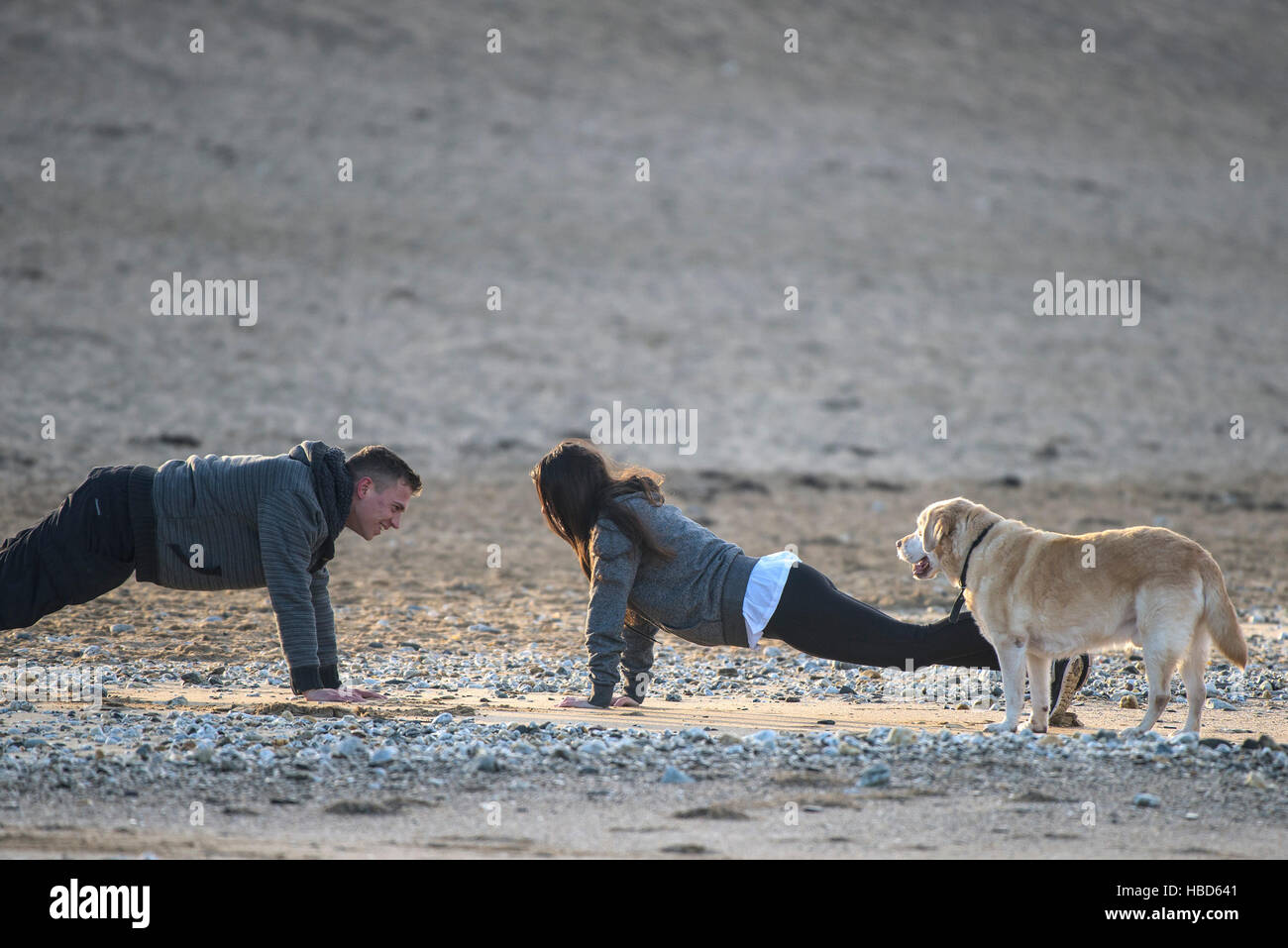 A bemused dog watches his owners doing press ups on Fistral beach in Newquay, Cornwall. - Stock Image