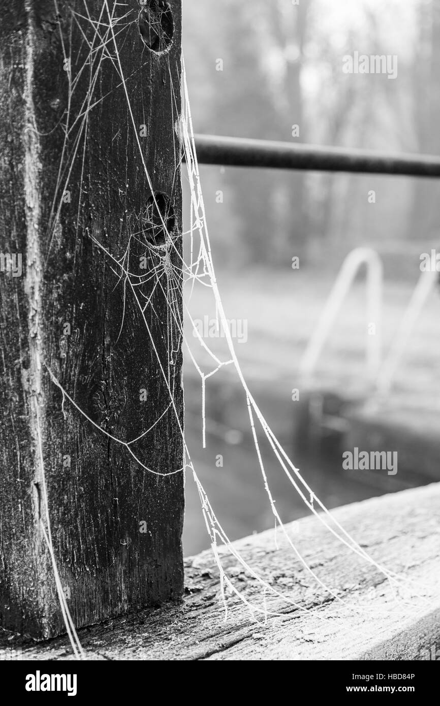 A frosted spider web on a lock gate on the Trent & Mersey Canal, Middlewich, Cheshire - Stock Image