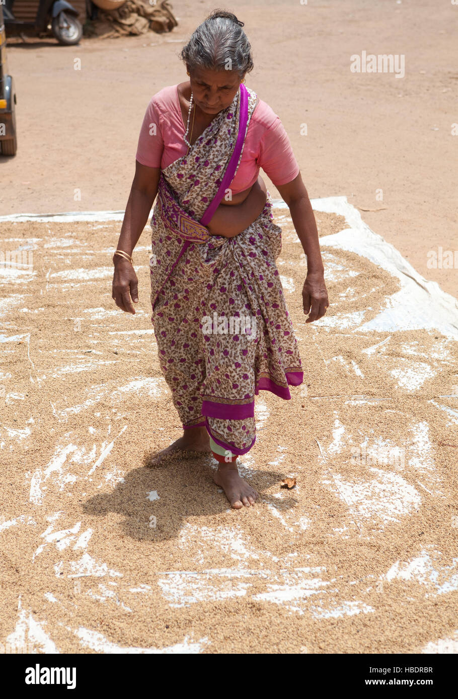 Elderly woman spreading drying rice on the ground with her feet.Kerala,India. - Stock Image