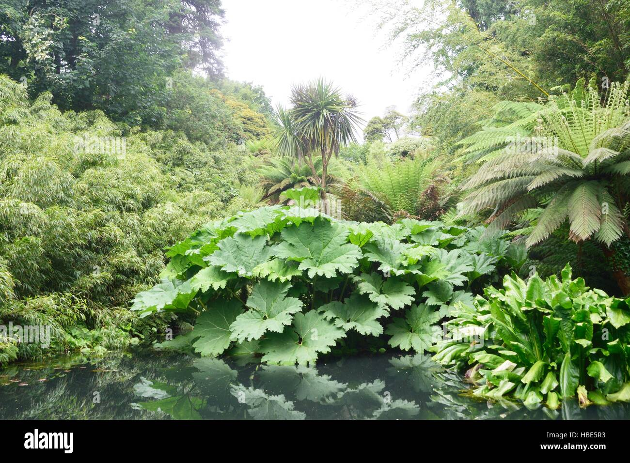 Lush green jungle like plants with pond - Stock Image