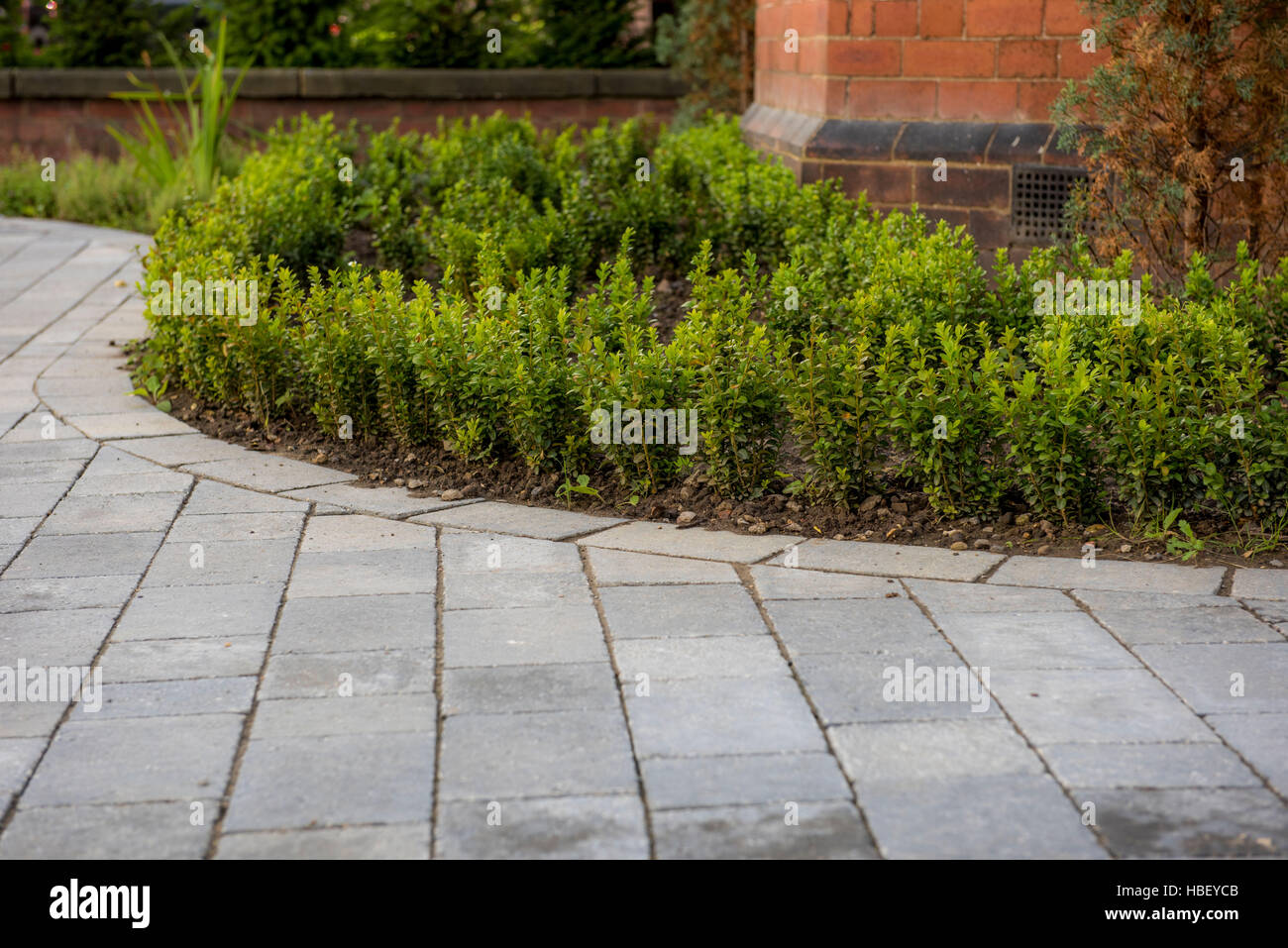 Block pavers driveway edged with young box hedging plants - Stock Image