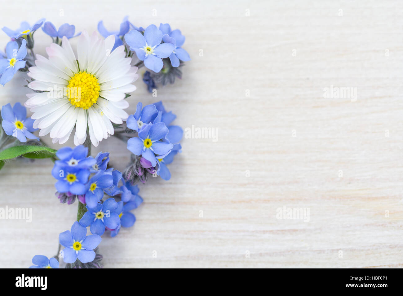 Forget-me-not, Daisy and grapehyacinth - Stock Image