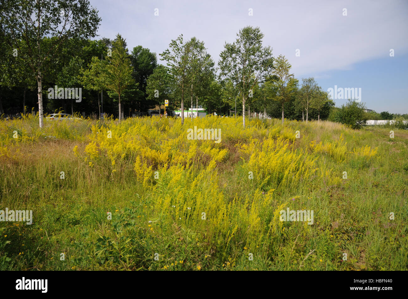 Meadow, urban green, wasteland - Stock Image