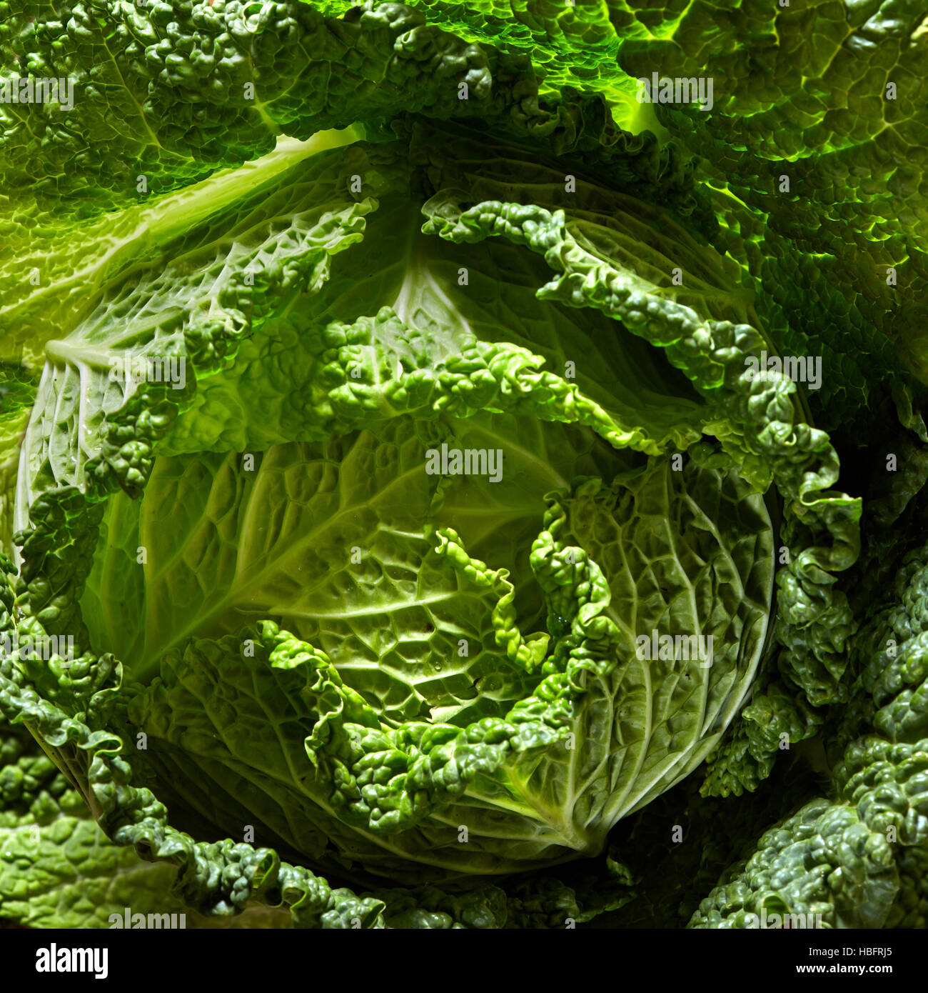 Savoy cabbage head - Stock Image