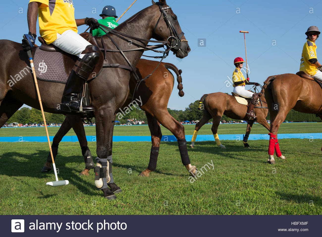 Players and ponies of Saratoga's polo club in Saratoga Springs, New York. - Stock Image