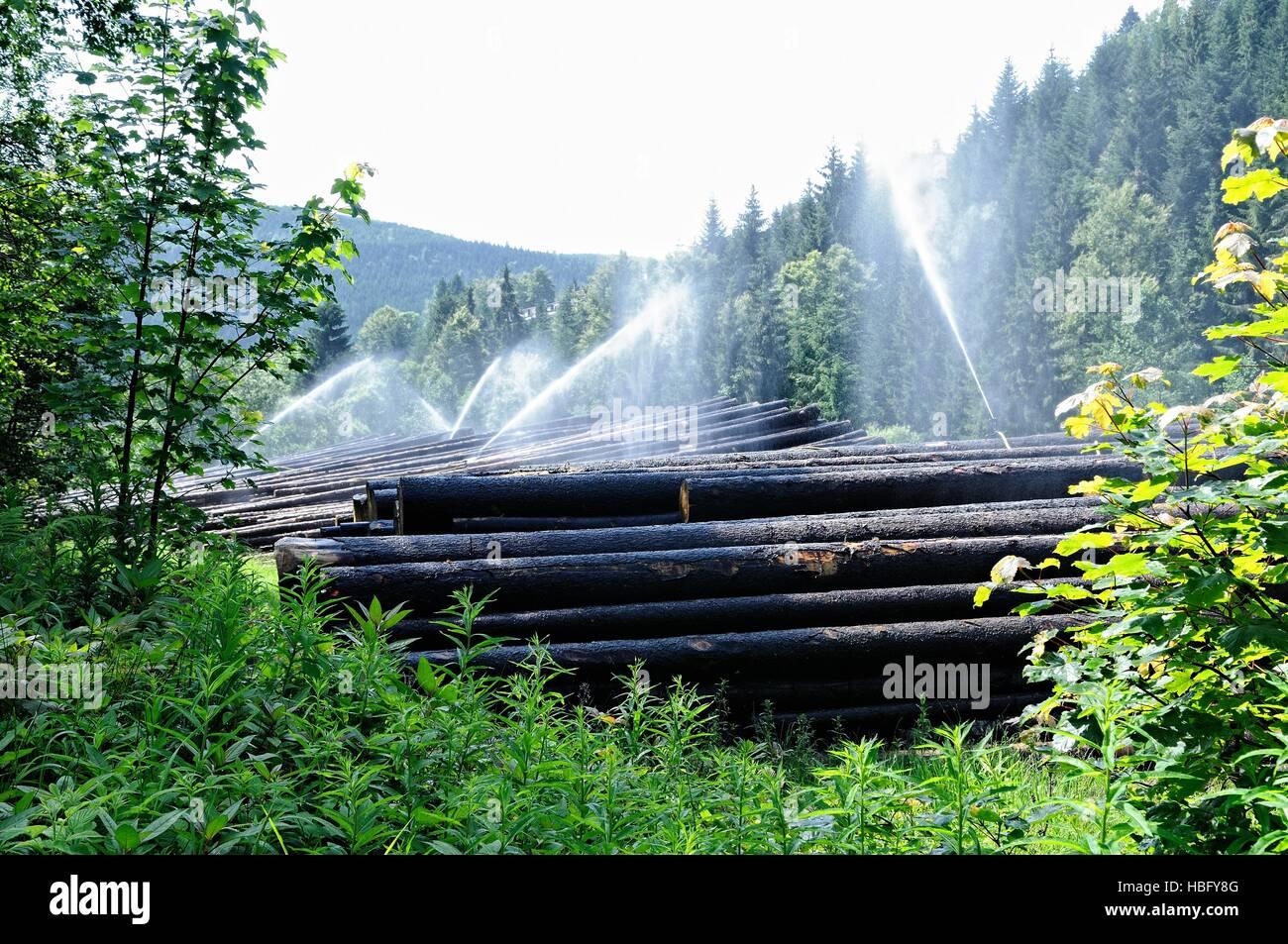 Irrigation of a lumber yard Stock Photo