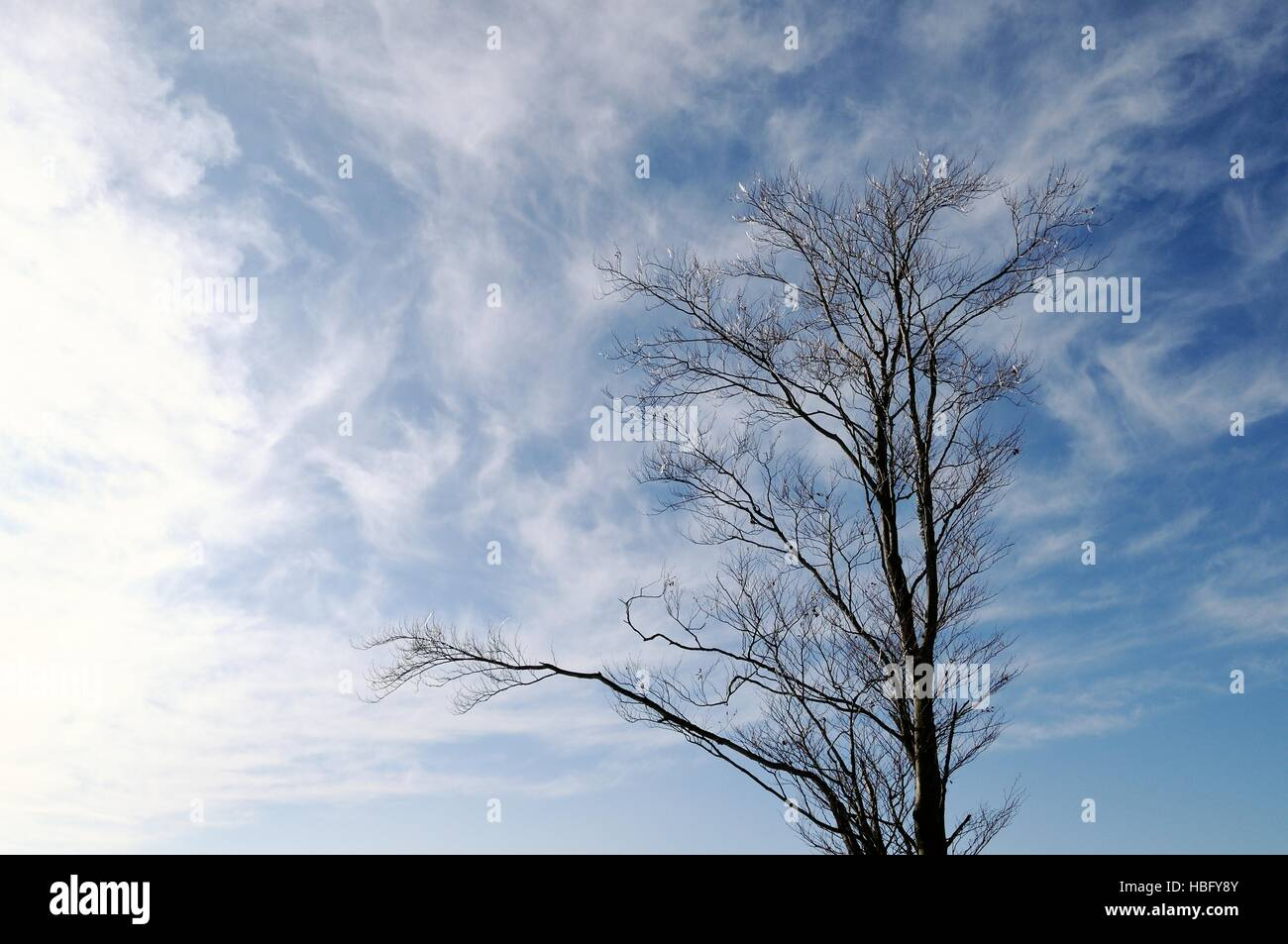 the tree of the sky and clouds - Stock Image