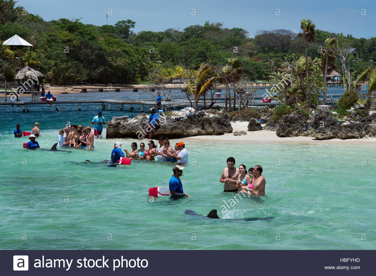 Tourists interact with a bottlenose dolphin at the Roatan Institute for Marine Science at Anthony's Key Resort - Stock Image