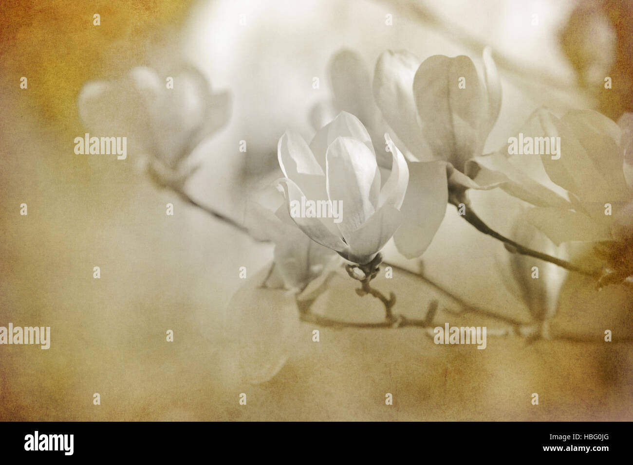 flowers tinted concept - Stock Image