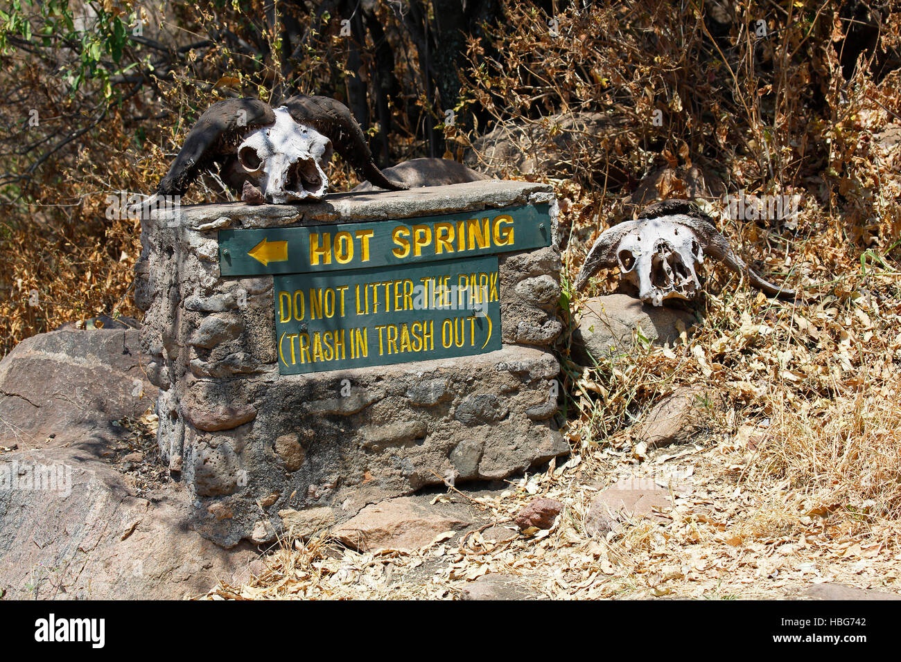 Sign decorated with buffalo skulls, litter warning and hot spring direction, Lake Manyara National Park, Tanzania - Stock Image