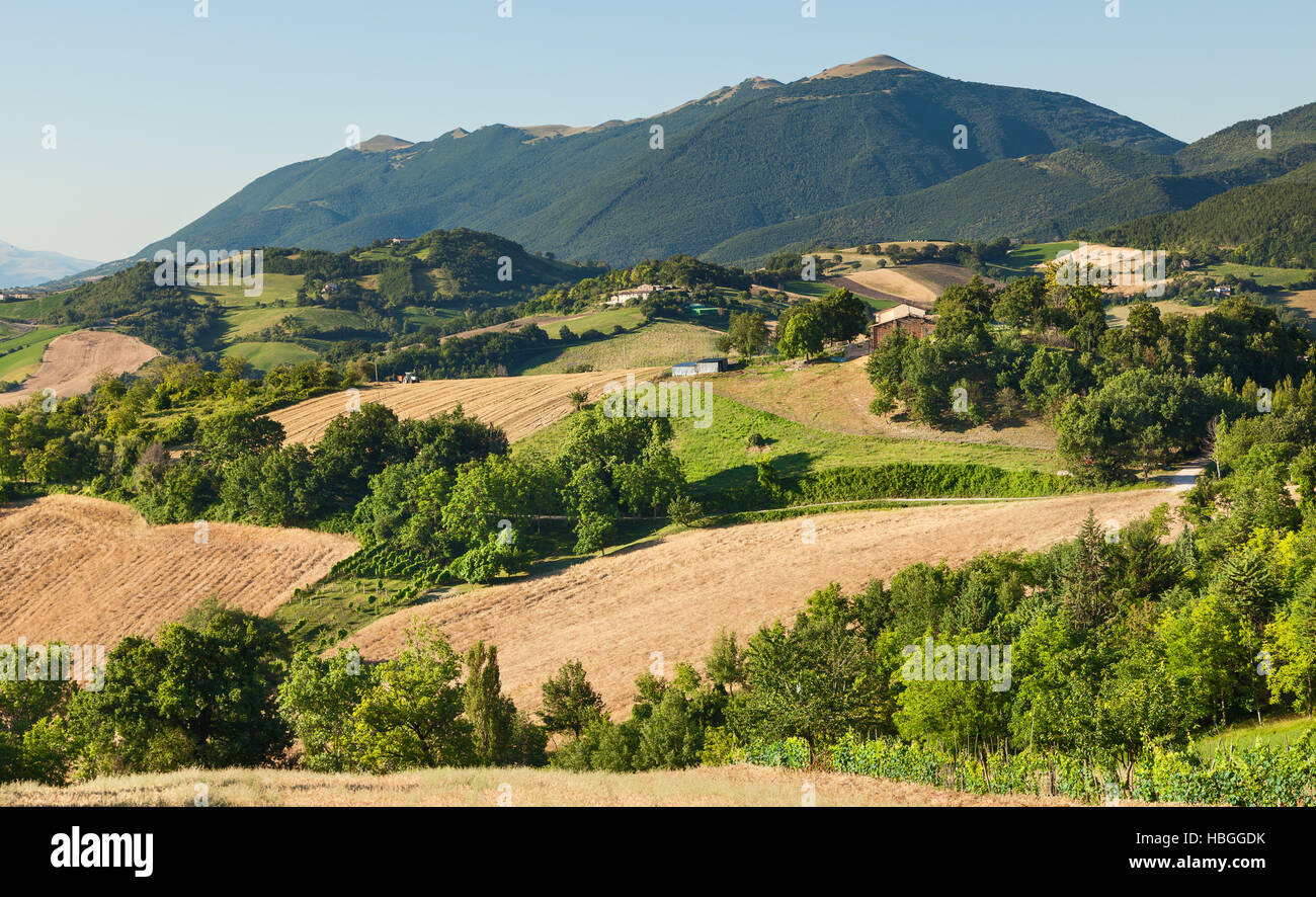 Hilly countryside of le Marche, Italy - Stock Image