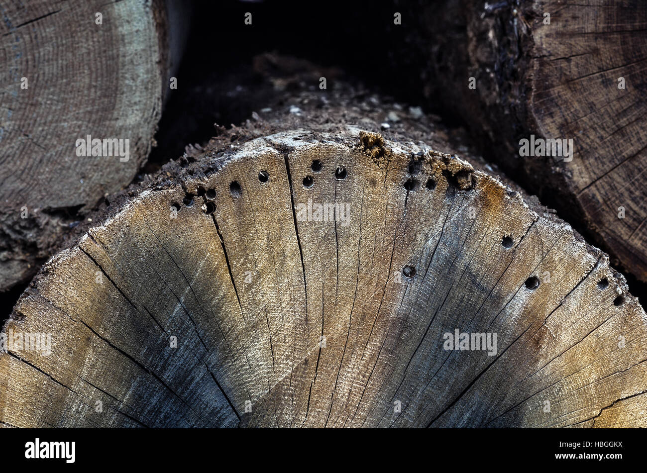 Bole With Holes Stock Photo 127598126 Alamy