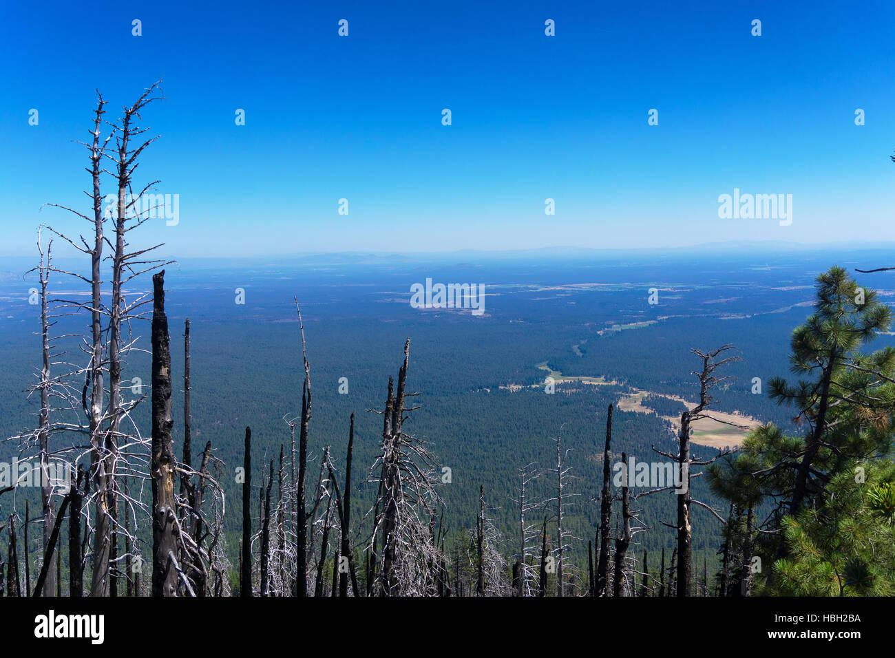 Stark trees bear witness as the valley stretches out until it comes up short against more mountain peaks from Black - Stock Image