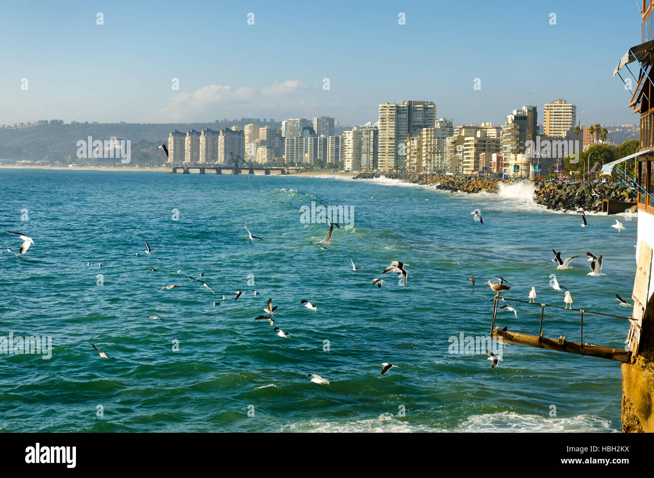 Birds enjoying the sun and surf in Vina del Mar, Chile - Stock Image