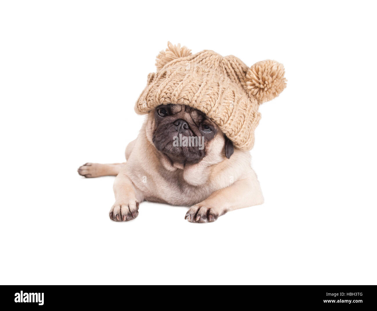lovely pug puppy dog lying down and wearing knitted hat with pompoms, isolated on white background - Stock Image