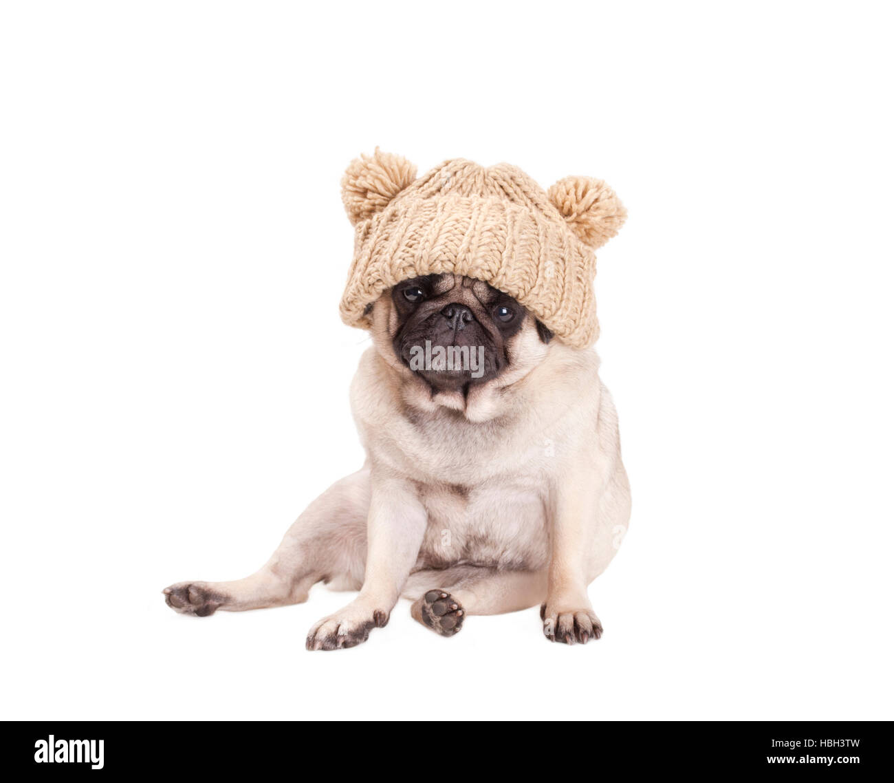 sweet pug puppy dog sitting down and wearing a knitted hat with pompoms, isolated on white background - Stock Image