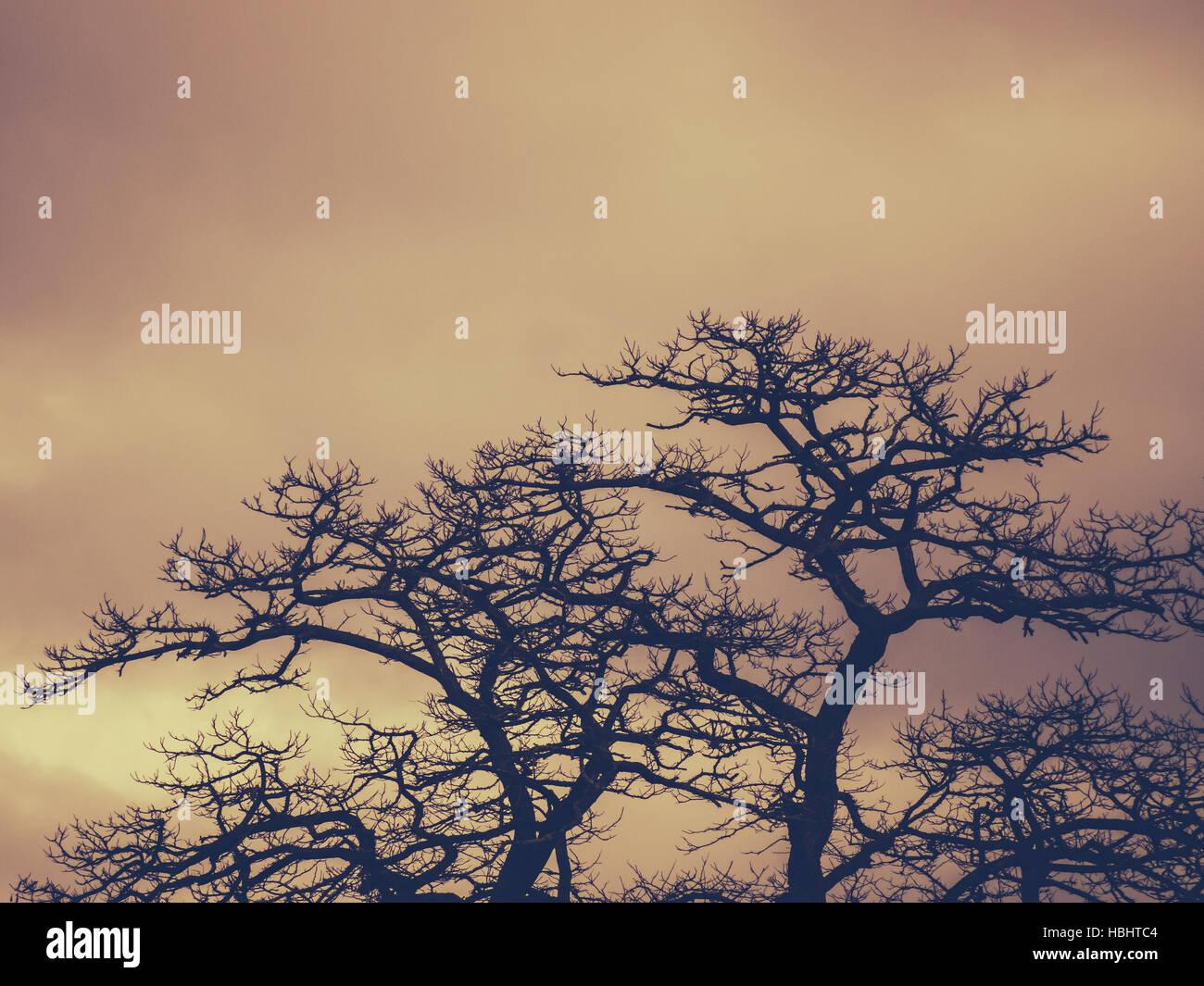 Leafless trees - Stock Image