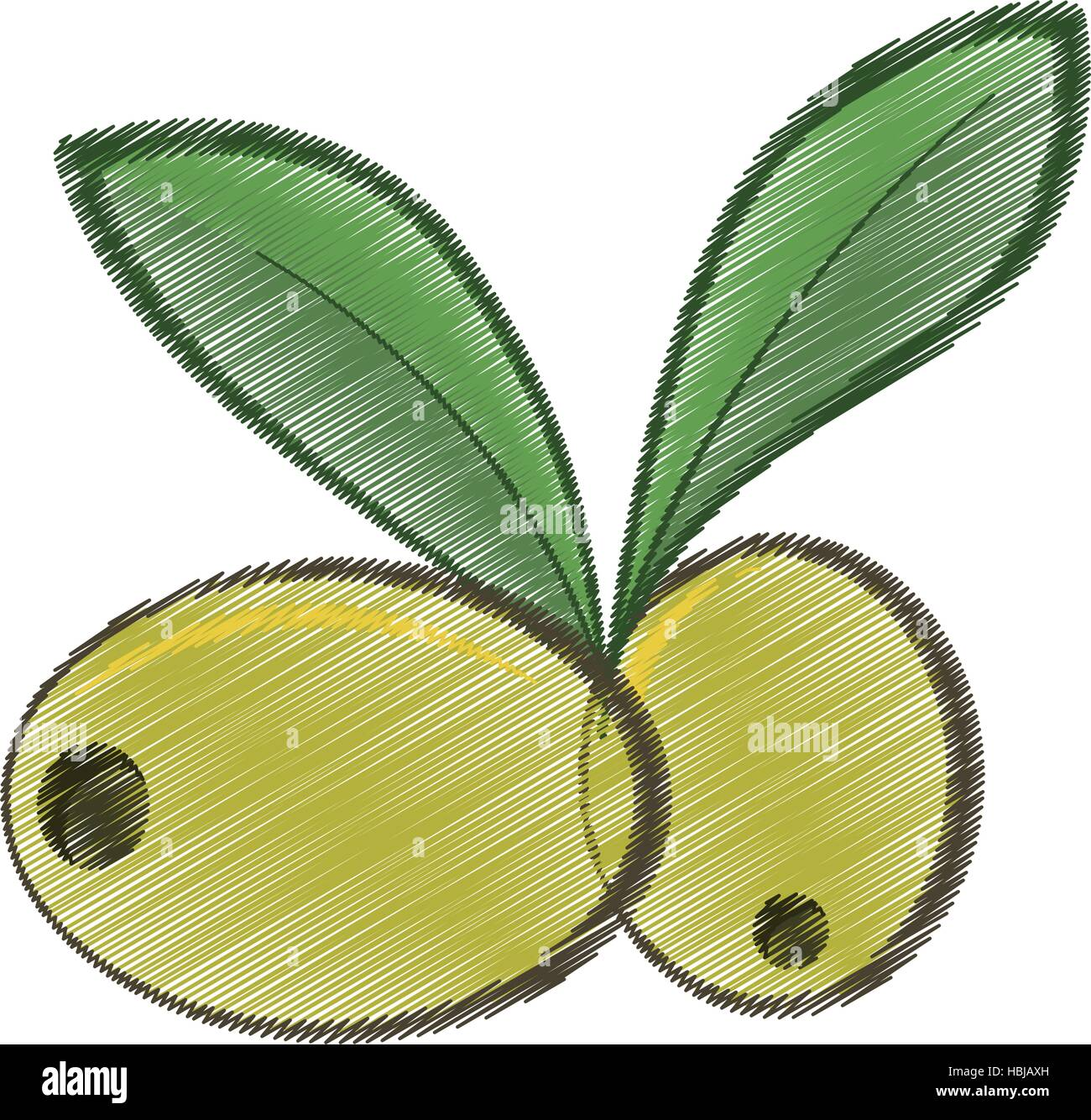 drawing two green olive leafs organic food vector illustration eps 10 - Stock Vector