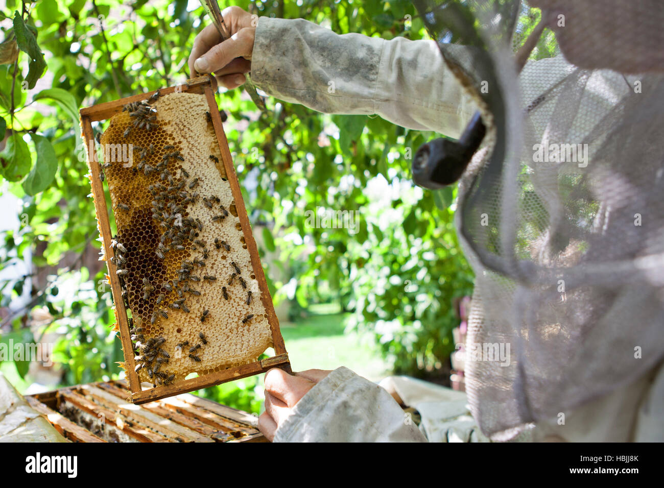 bee keeper with bee colony - Stock Image