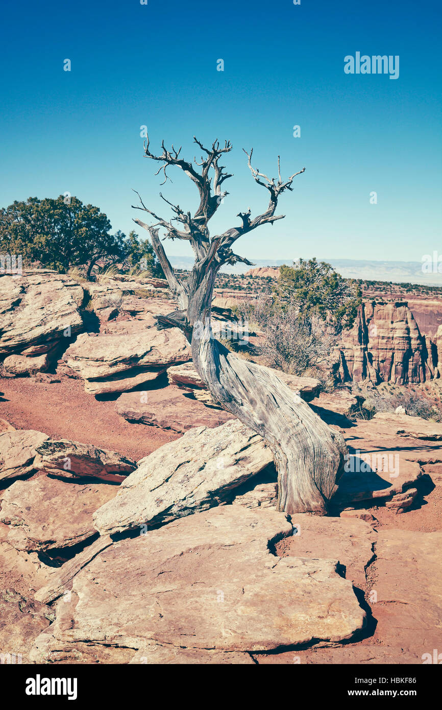 Cross processed dead tree, global warming concept, Colorado National Monument, Colorado, USA - Stock Image