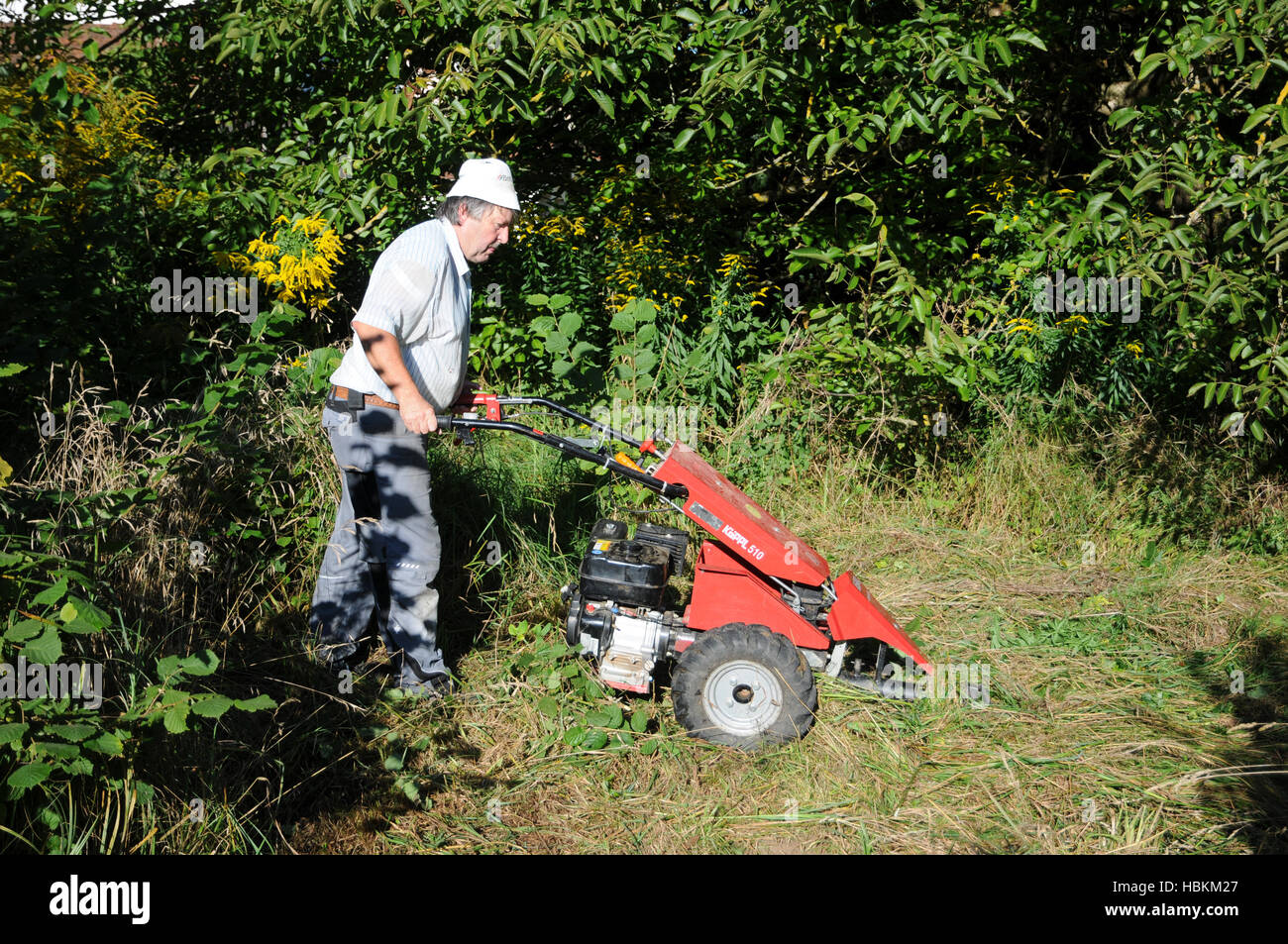meadow mowing with sickle bar mower Stock Photo: 127666623 - Alamy