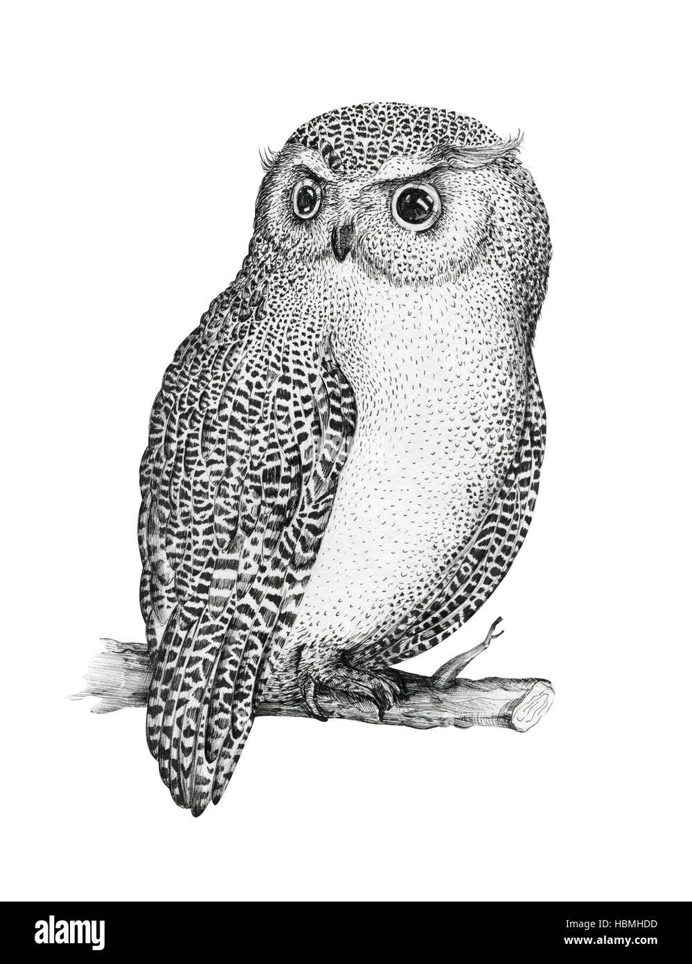 bb64023de28c7 Hand drawn isolated black white illustration owl fly bird. Trib ...