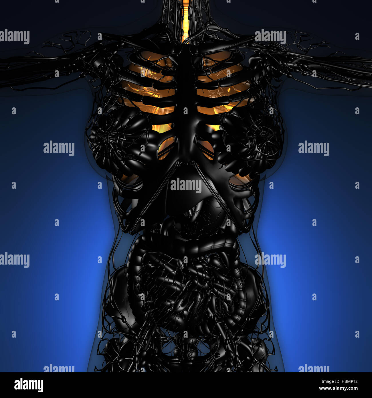 science anatomy of woman body with glow lungs Stock Photo: 127690754 ...