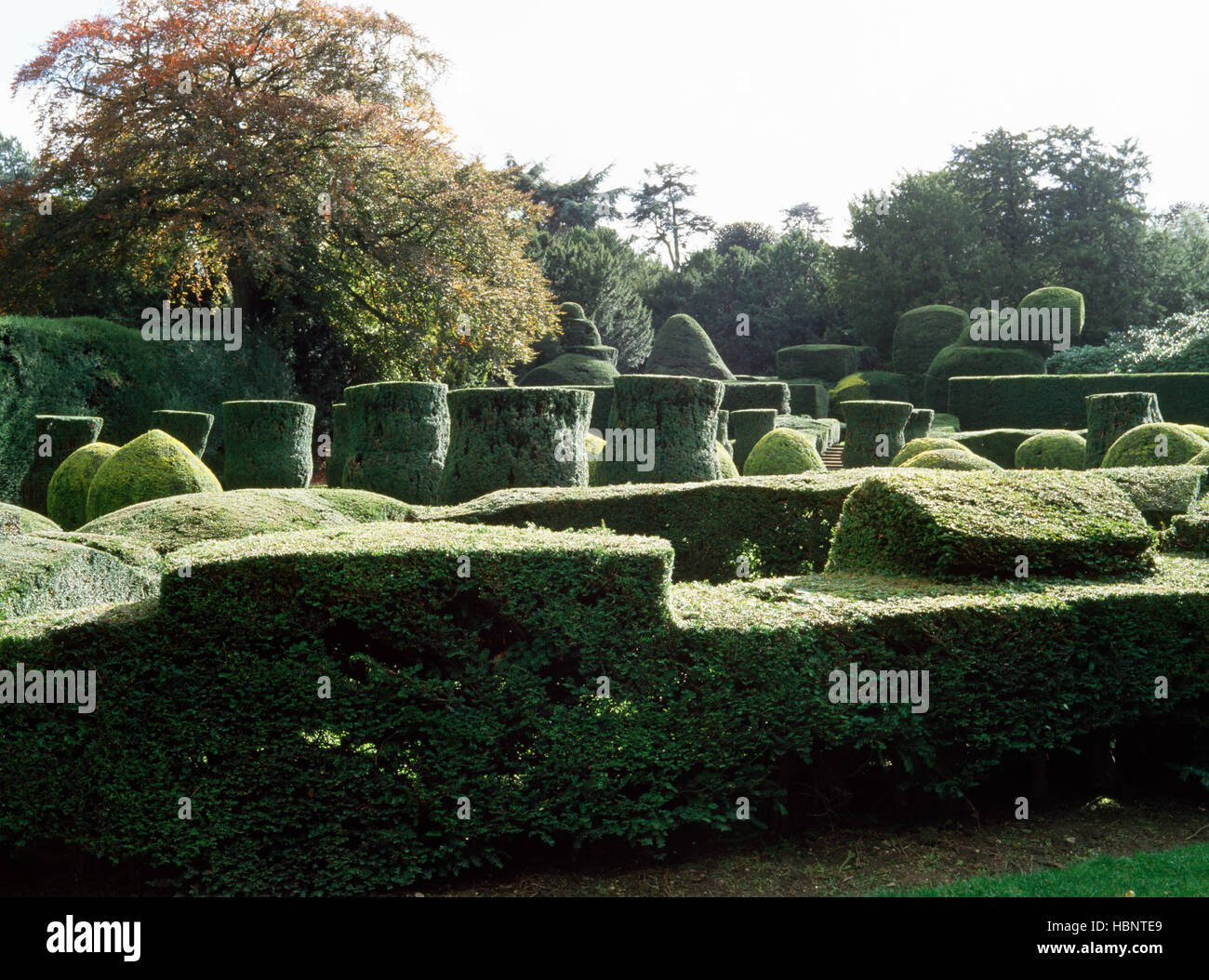 Clipped yew topiary in the formal gardens, Elvaston Castle, Derbyshire, UK - Stock Image
