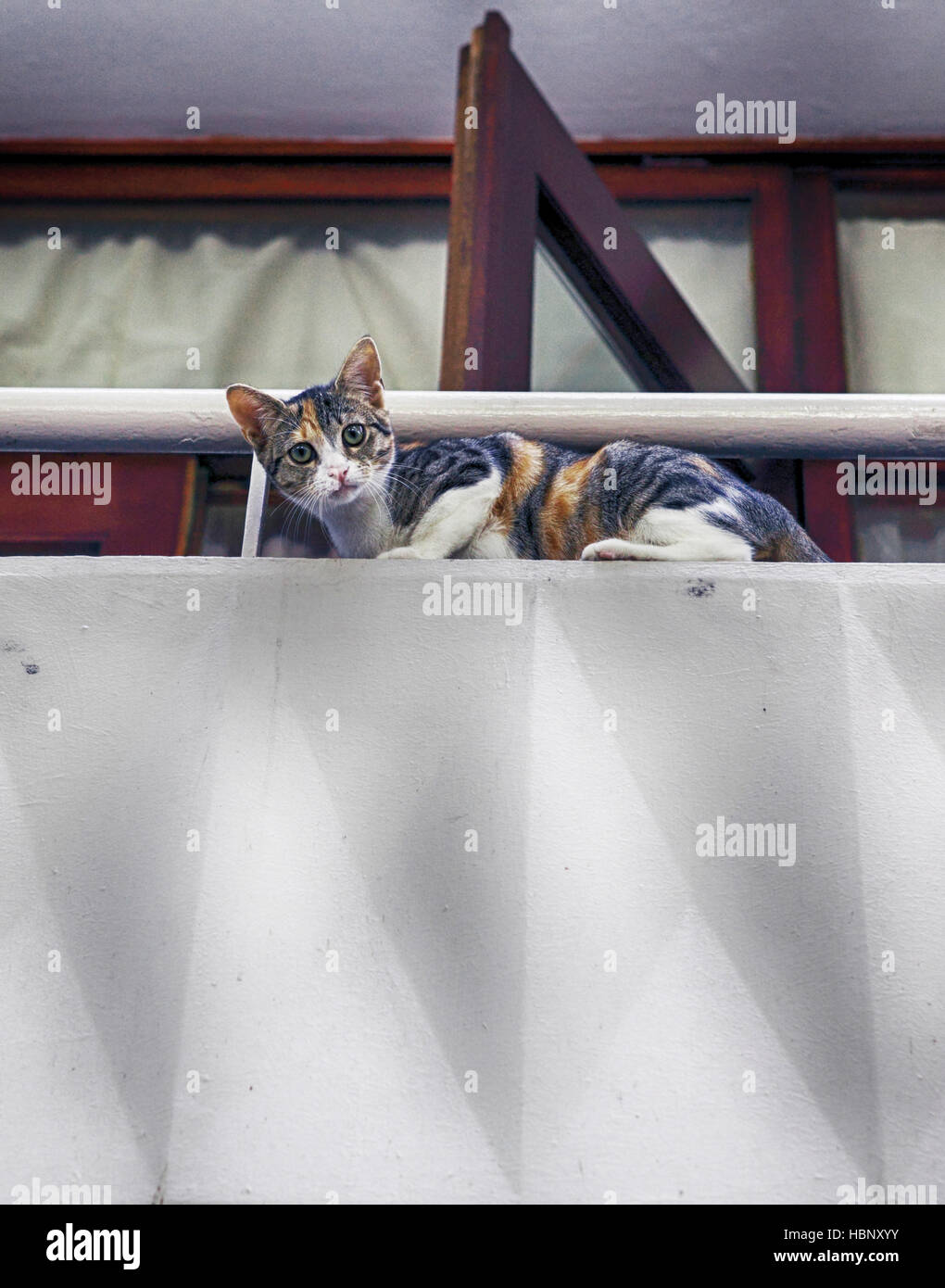 cat on balkony Stock Photo