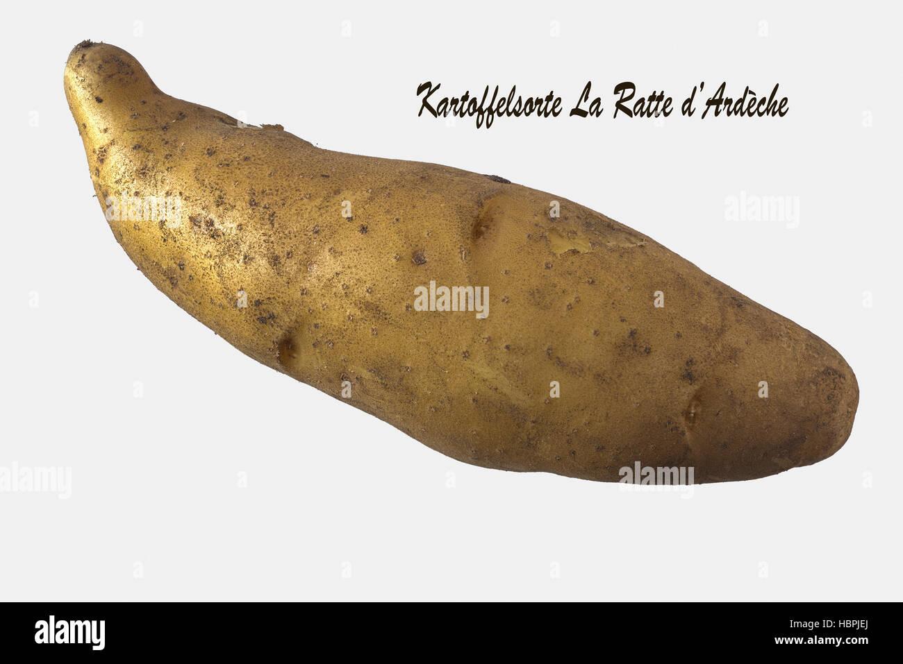 Ratte Potato, Cut-out Stock Photo