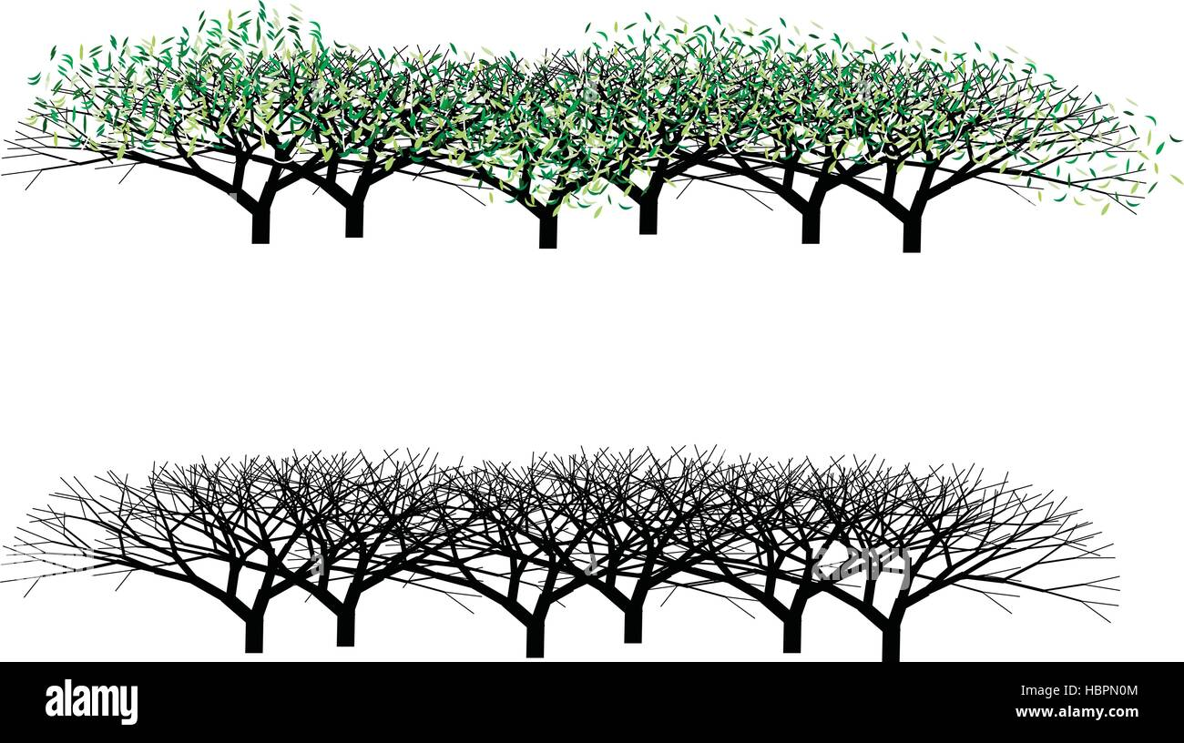 Hedges with and without leaves, vector editable - Stock Vector