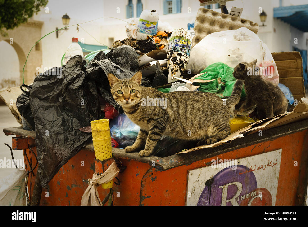Cats_Tunesia - Stock Image