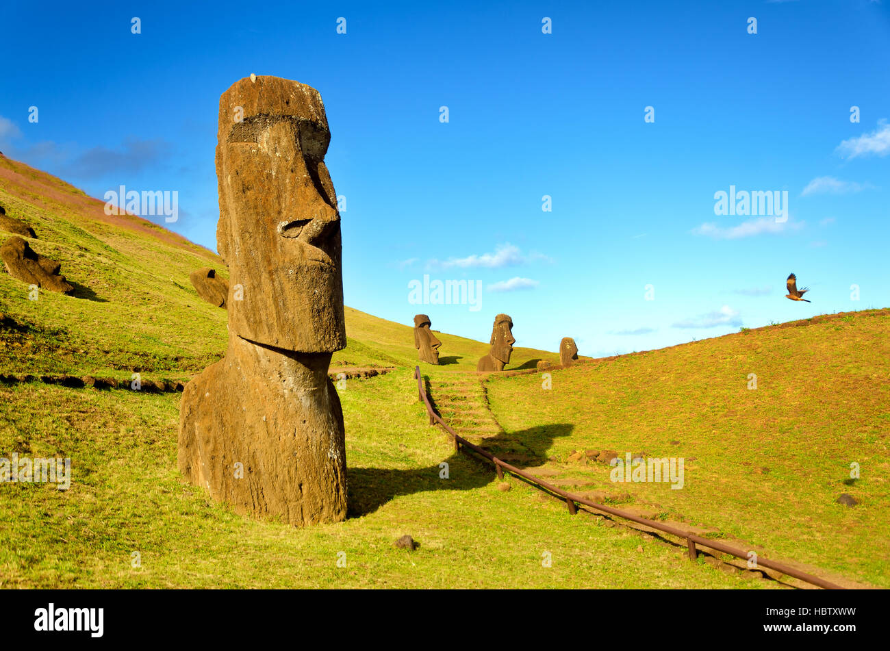 The Moai of the hills of Easter Island, Chile are joined in their solitude by a flying hawk - Stock Image