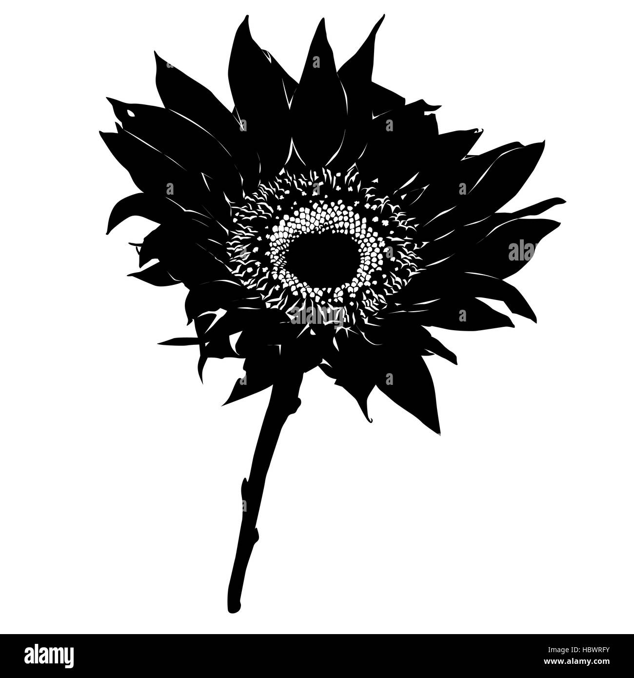 Sunflower Silhouette Stock Photo Alamy Sunflower silhouette, lake george, ny. https www alamy com stock photo sunflower silhouette 127801071 html