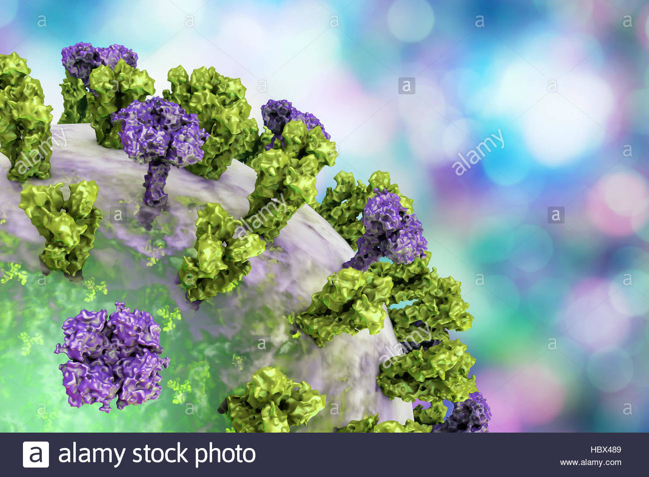 Flu virus. Illustration showing influenza virus with surface glycoprotein spikes hemagglutinin (HA, trimer) and - Stock Image