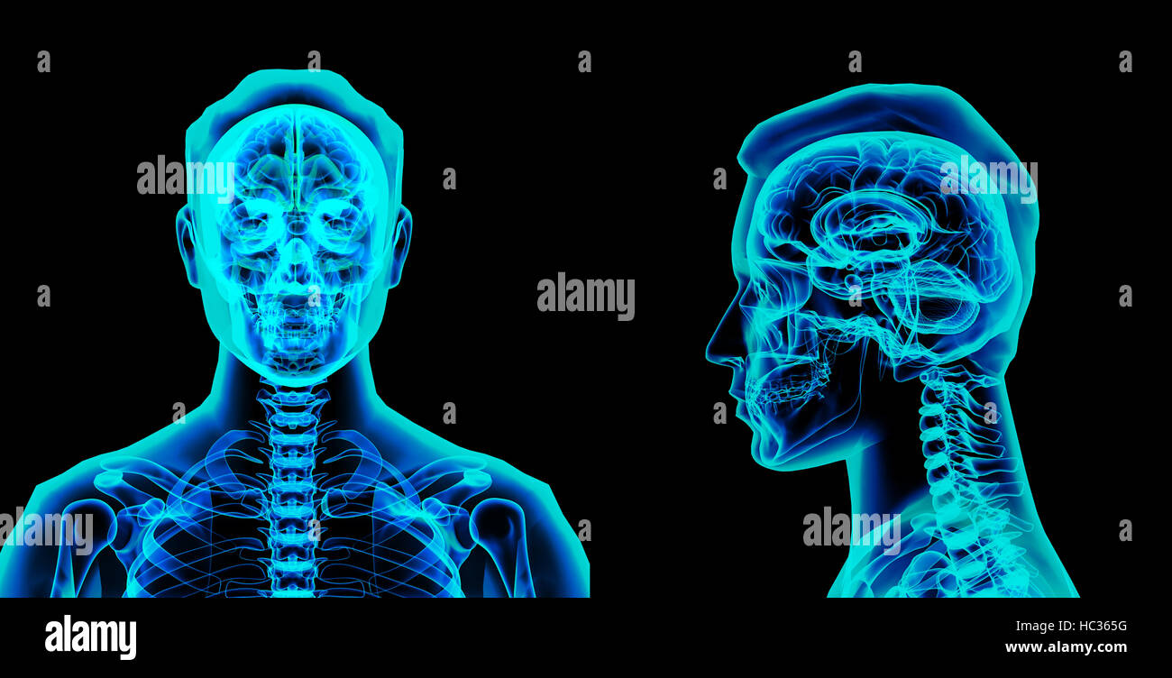 3d rendered illustration of the brain Stock Photo
