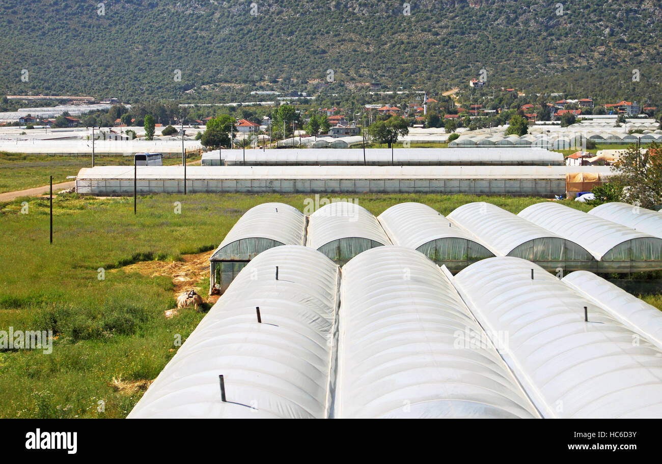 Glasshouses with plastic near village in Turkey - Stock Image