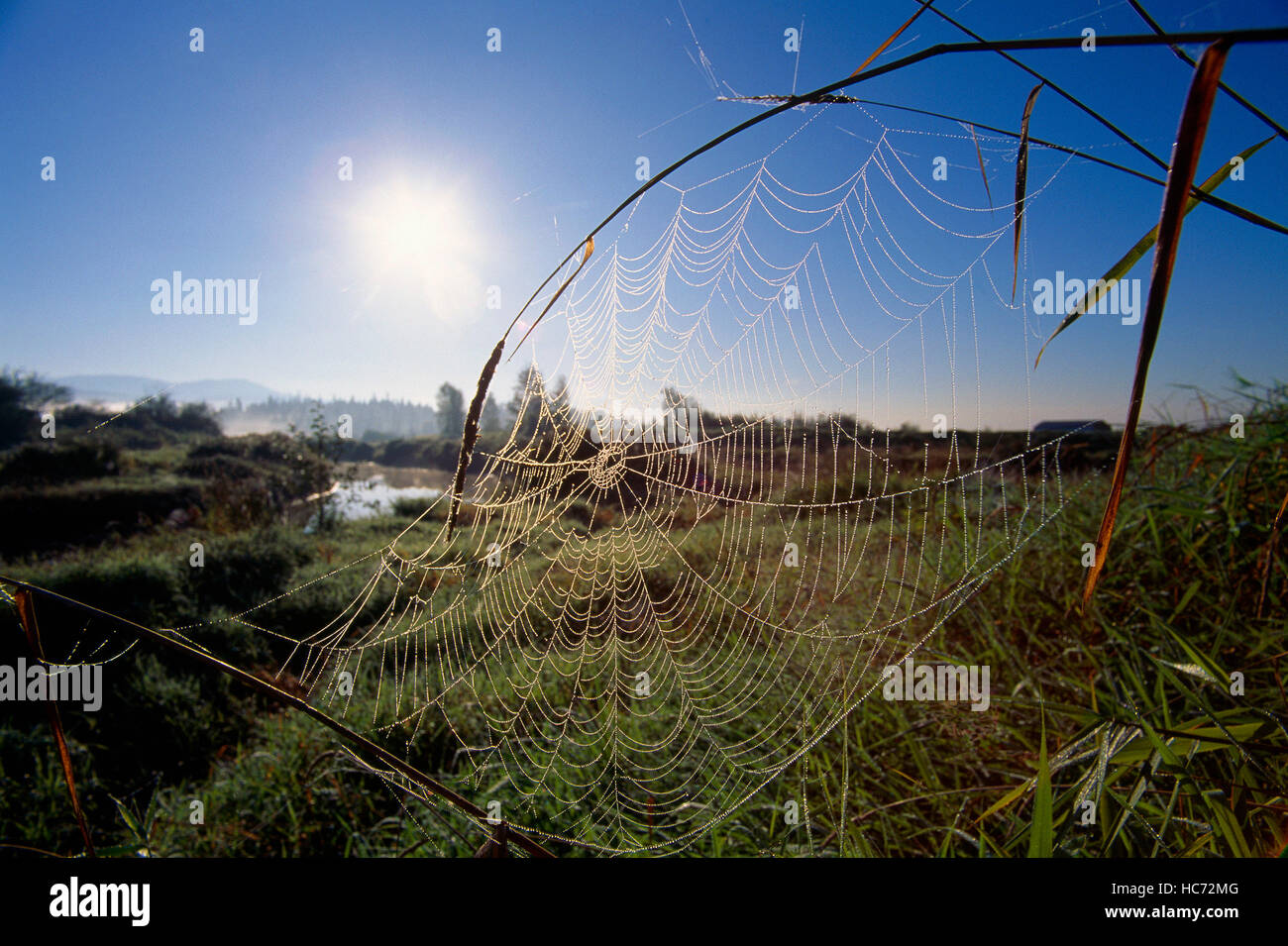 Spider Web covered in Early Morning Dew in a Rural Landscape - Stock Image
