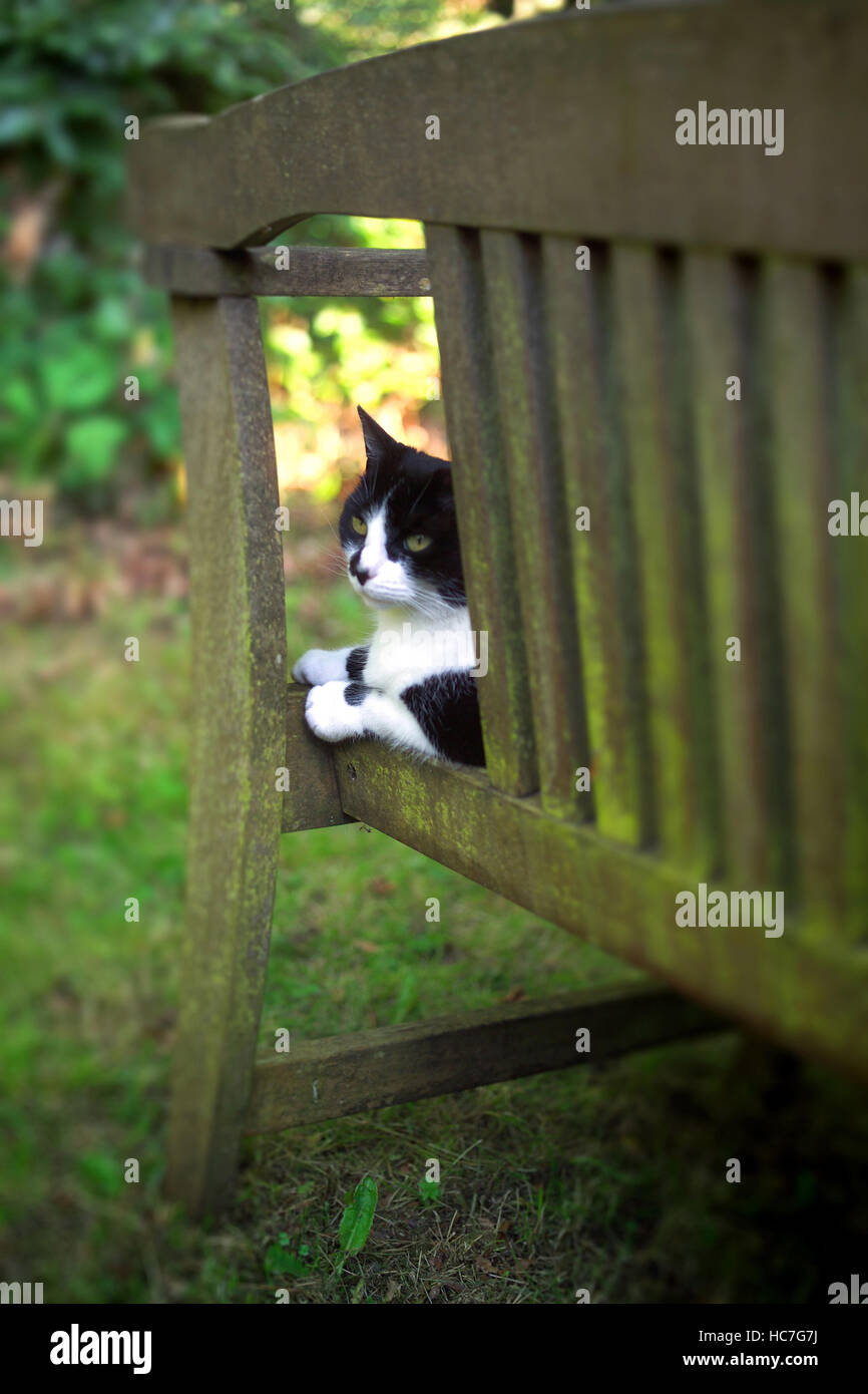 Enjoyable Squirtle The Cat On A Garden Bench Stock Photo 128014870 Inzonedesignstudio Interior Chair Design Inzonedesignstudiocom