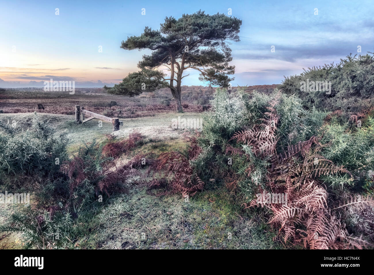 Bratley View, New Forest, Hampshire, England, UK - Stock Image