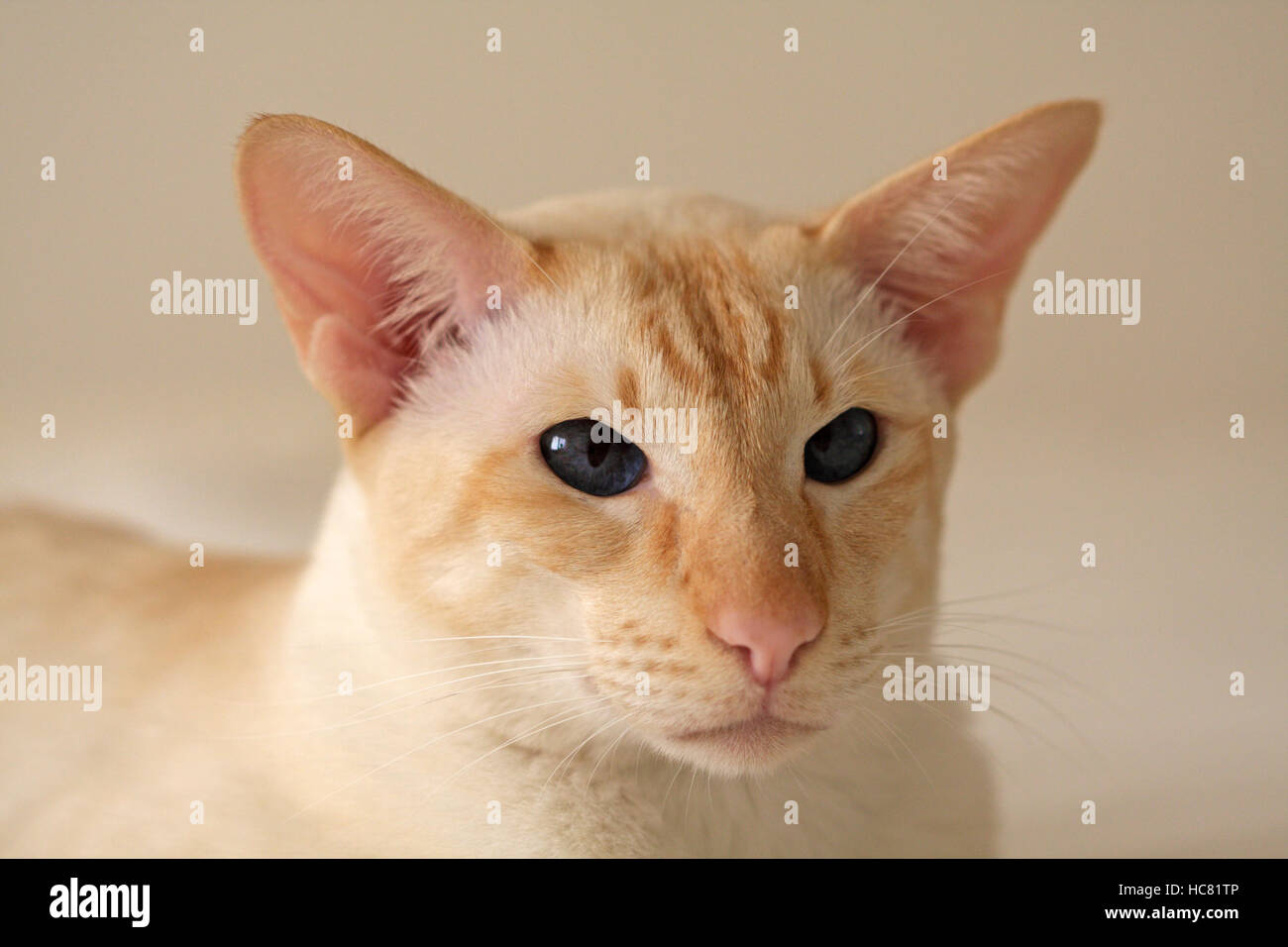 cat gps tracker chip