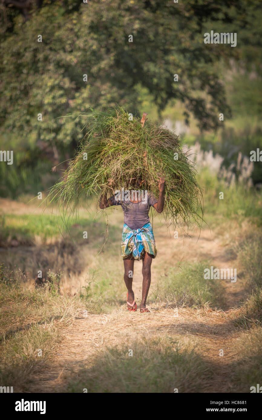 Man carrying a bundle of grass on his head, near Hampi, Karnataka, India - Stock Image
