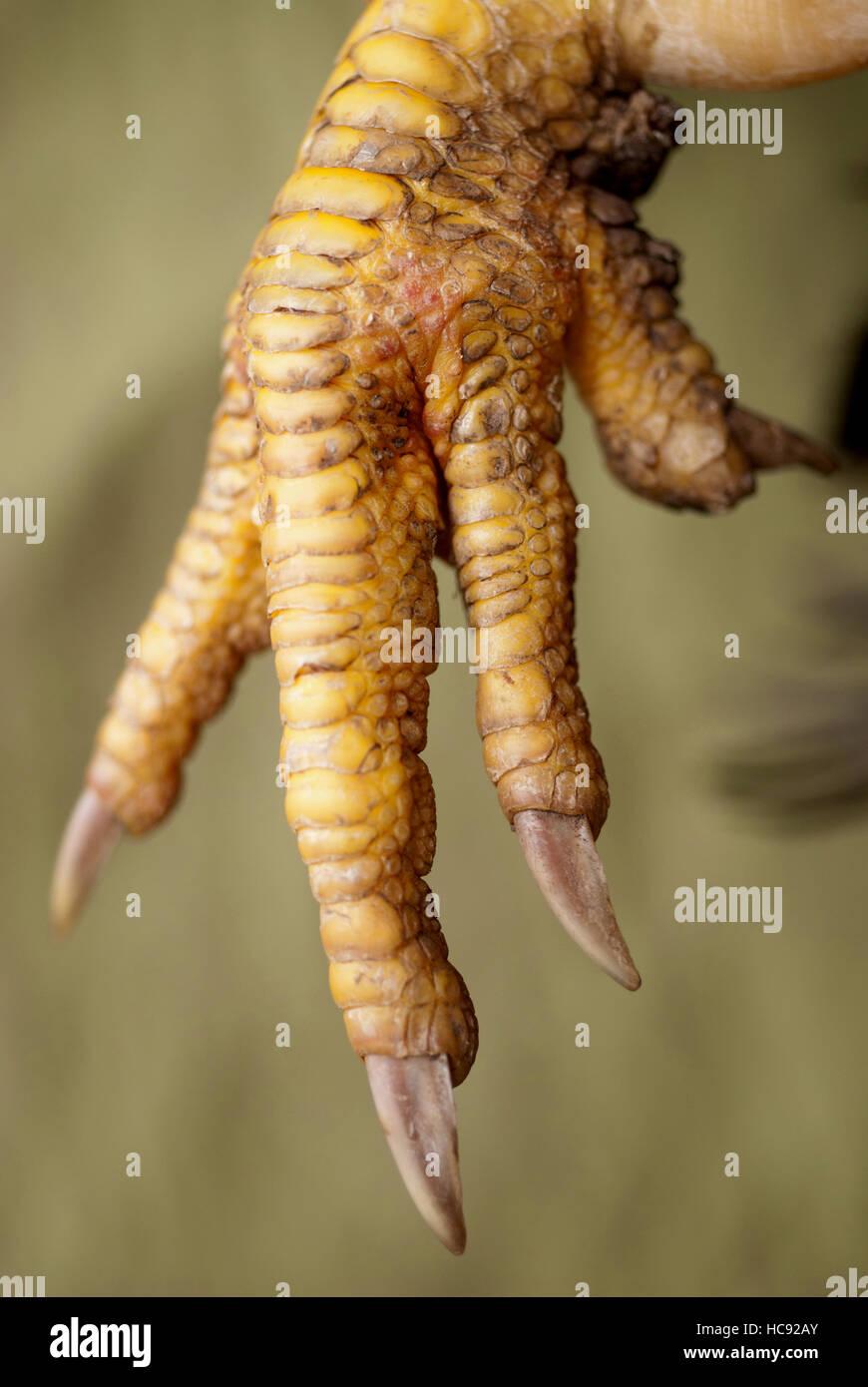 Cadaver Foot Stock Photos & Cadaver Foot Stock Images - Alamy