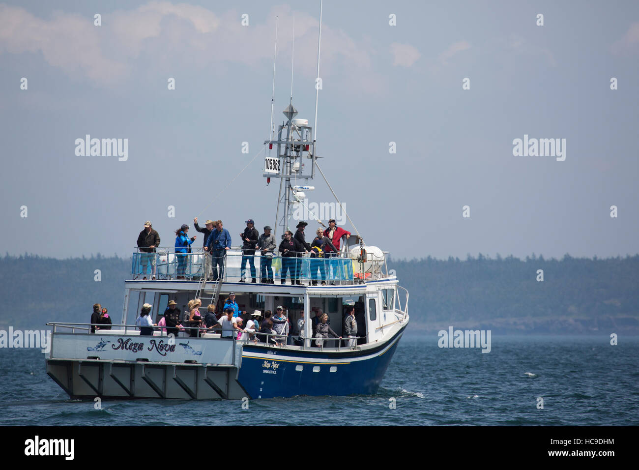 A whale watching cruise off Nova Scotia, Canada. The area is known for whale watching tours. - Stock Image