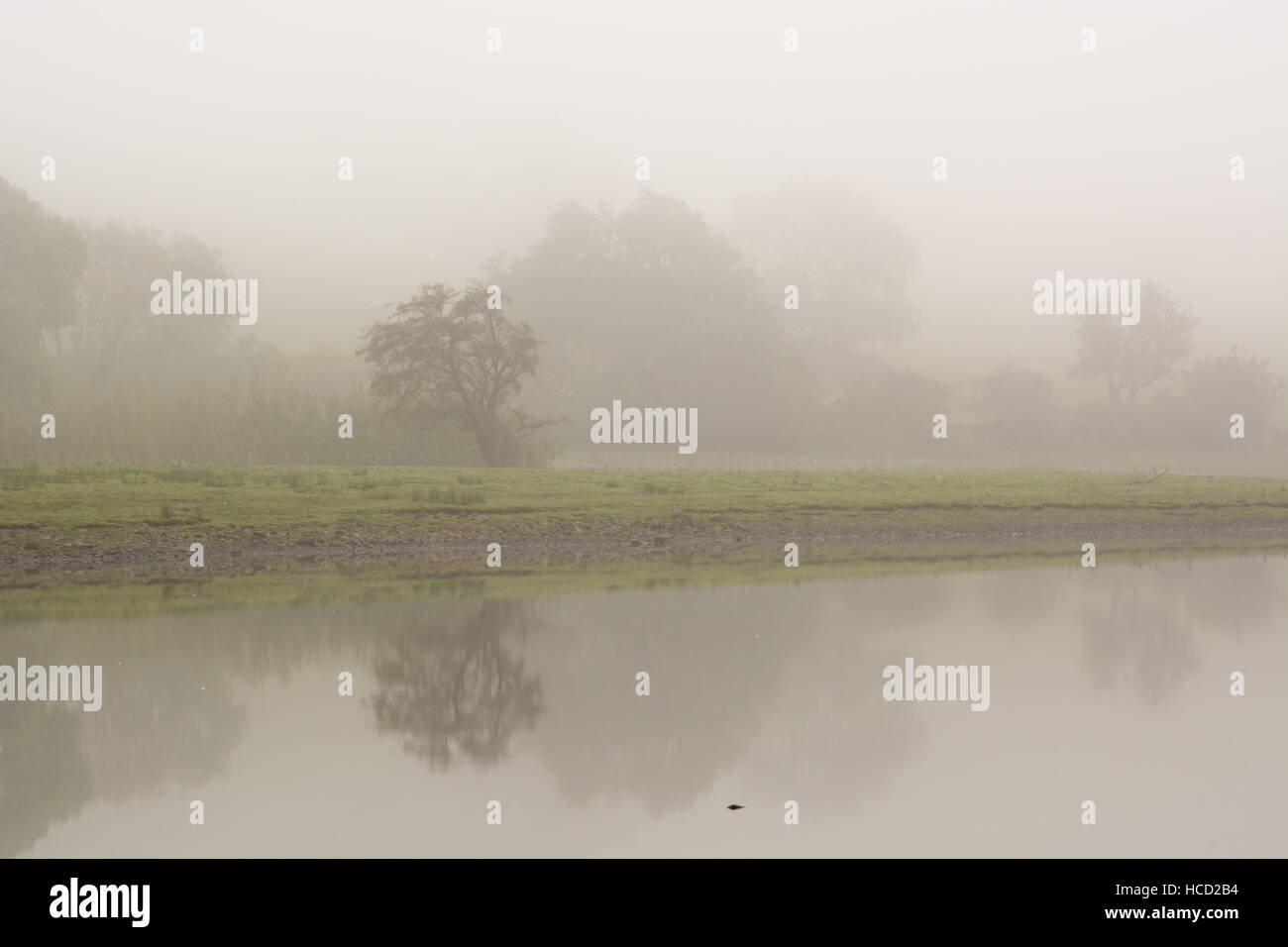 Minimal misty view of trees reflected in water - Stock Image
