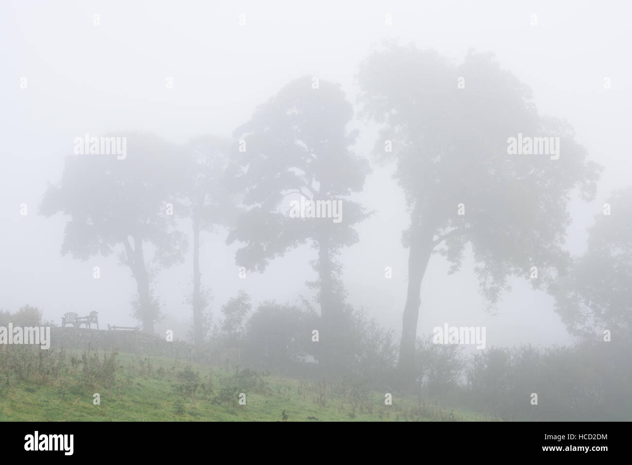 Trio of trees in the fog - Stock Image